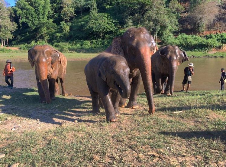elephants7